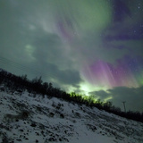 Aurora Borealis Above Reindeer in a Snow-Covered Winter Landscape Photographic Print by Babak Tafreshi