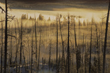 Landscape of a Burned Forest Covered in Fog Photographic Print by Tom Murphy