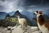 Llamas Overlook the Pre-Columbian Inca Ruins of Machu Picchu 写真プリント : ジム・リチャードソン