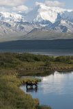 A Bull Moose, Alces Alces, Drinks from a Kettle Pond Photographic Print by Barrett Hedges