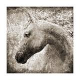 Majestic Horse Posters av Eric Yang