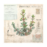 Portulacaria…Sketchbook Kunstdrucke von Angela Staehling
