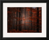 Spiritual Wood Framed Photographic Print by Philippe Sainte-Laudy