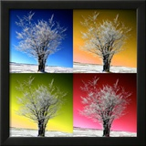 Four Seasons Framed Photographic Print by Philippe Sainte-Laudy