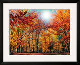 Camouflage Framed Photographic Print by Philippe Sainte-Laudy