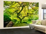 Japanese Maple Tree Tapetmaleri