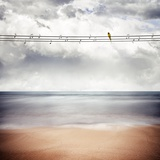 A Yellow Bird Sitting on a Wire Stampa fotografica di Luis Beltran