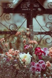 Grave with Flowers Photographic Print by Carolina Hernandez