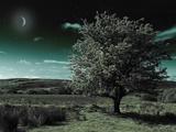 A Tree under a Night Sky Metalltrykk av Mark Gemmell