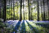 English Woodland in Spring Fotografisk trykk av Mark Gemmell