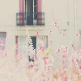 French Building with Soft Flowers Fotografie-Druck von Laura Evans