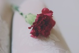 Red Carnation Photographic Print by Carolina Hernandez