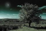 A Tree under a Night Sky Fotografisk trykk av Mark Gemmell