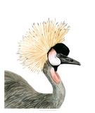 Watercolor Crested Crane Giclee Print by Naomi McCavitt