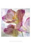 Pink Hyacinth I Prints by Honey Malek