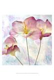Pink Hyacinth IV Prints by Honey Malek