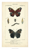 Antique Butterfly Study II Giclée-tryk af  Turpin