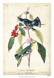 Cerulean Wood Warbler Giclee Print by John James Audubon