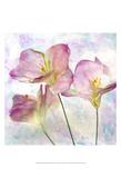 Pink Hyacinth III Print by Honey Malek