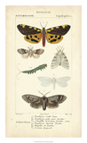 Antique Butterfly Study I Giclée-tryk af  Turpin