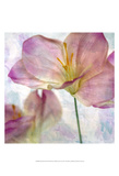 Pink Hyacinth II Posters by Honey Malek