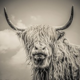 Highland Cattle Stretched Canvas Print by Mark Gemmell