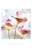 Pink Hyacinth VI Prints by Honey Malek