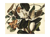 Black-Billed Cuckoo, 1822 Giclée-tryk af John James Audubon