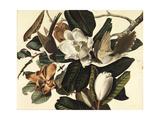 Black-Billed Cuckoo, 1822 Giclée-vedos tekijänä John James Audubon