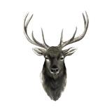 Western Animal Study V Prints by Grace Popp