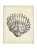 Antique Shell Study III Posters af Ethan Harper