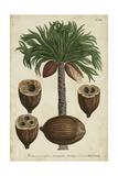 Vintage Tropicals I Posters por  Weinmann