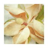 Vintage Magnolia I Art by Honey Malek