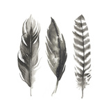 Watercolor Feathers I Plakater af Grace Popp