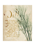 Herb Study II Prints by Grace Popp