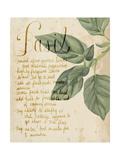 Herb Study I Kunstdrucke von Grace Popp