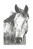 Wildlife Snapshot: Horse I Poster by Naomi McCavitt