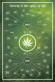 Cannabis- Variety Is The Spice Of Life Posters