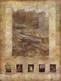 Botany Journal I Giclee Print by  Kemp