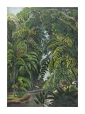 Jungle Cascade Lámina giclée prémium por  19th Century English School