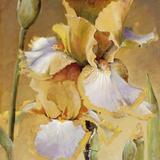 Golden Iris II Stampa giclée di  Carney