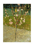 Almond Tree in Blossom, 1888 Giclee Print by Vincent van Gogh