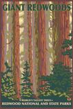 Giant Redwoods, Redwood National Park, California Plastic Sign by  Lantern Press