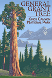 General Grant Tree - Kings Canyon National Park, California Plastikschild von  Lantern Press