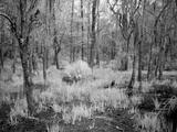 Blakeley State Park, Civil War Photo by Carol Highsmith