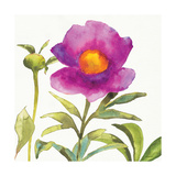 Summer Meadow Blossom Crop II Prints by Shirley Novak