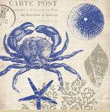 Sea Collage II Posters par Paula Scaletta