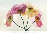 Translucence Prints by Harold Davis