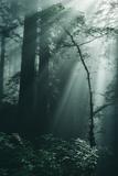 Green Forest Light, California Redwoods, Del Norte Coast Fotografie-Druck von Vincent James