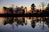 Silhouetted Trees and their Reflections in Water at Sunrise Photographic Print by Robbie George